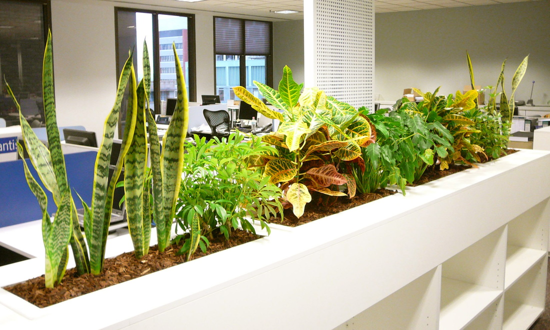 Benefits Of Indoor Plants In Offices And Homes